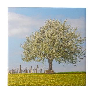 Cherry Tree In Spring Ceramic Tile