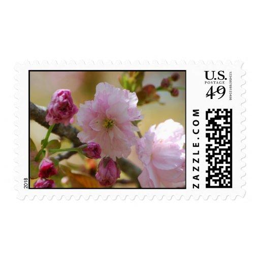 Cherry Tree Postage Stamp