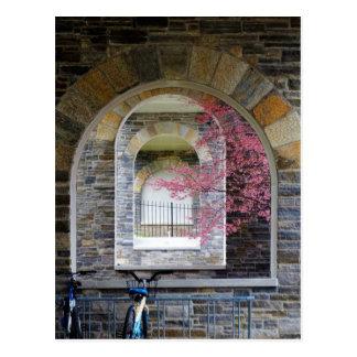 Cherry Tree Through The Arches Postcard
