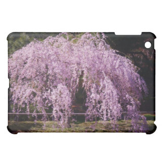 Cherry Tree With Cherry Blossoms In Full Bloom iPad Mini Cover