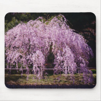 Cherry Tree With Cherry Blossoms In Full Bloom Mouse Pad
