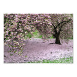 Cherry Trees Blossoms Spring in Central Park Card