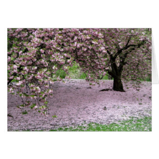 Cherry Trees Blossoms Spring in Central Park Cards