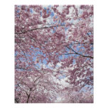 Cherry trees in blossom poster