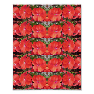 CherryHILL Honeymoon Red Blossom NVN225 NavinJOSHI Poster