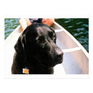 Chert Dog Postcard