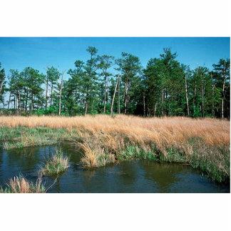 Chesapeake Bay, Eagle Nest Area Acrylic Cut Outs
