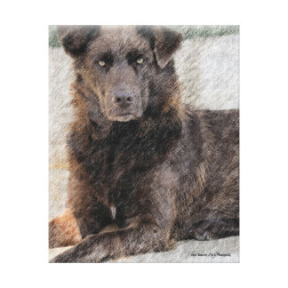 Chesapeake Bay Retriever Canvas Prints