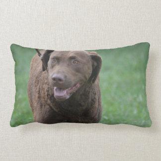 Chesapeake Bay Retriever Lumbar Pillow