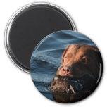 Chesapeake Bay Retriever Magnets
