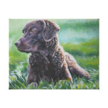 Chesapeake Bay Retriever on Wrapped Canvas Gallery Wrap Canvas
