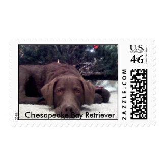 Chesapeake Bay Retriever Postage Stamps