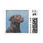 chesapeake bay retriever postage stamp