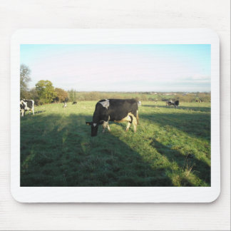 Cheshire Cattle Mouse Pads