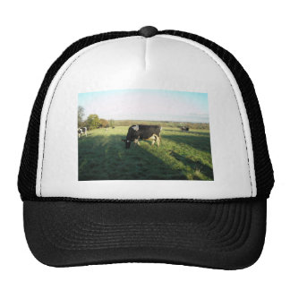 Cheshire Cattle Trucker Hat