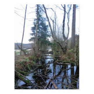 Cheshire Wetlands Postcard