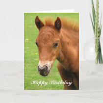 Chesnut foal baby horse happy birthday card