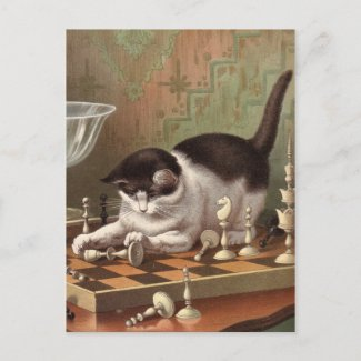 Chess Cat postcard postcard