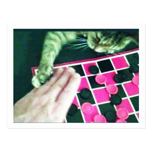 Chess Kitty Jokeapptv cat postcard