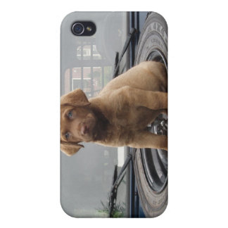 Chessie Puppy Peace Love Party Destiny Cover For iPhone 4