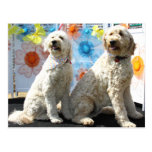 Chester and Lilly - GoldenDoodle -7 Postcard