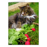 Chester and the Radishes / Birthday Greeting Card