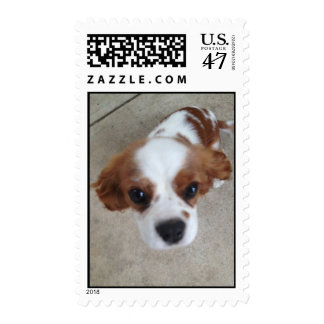 Chester Cavalier King Charles Spaniel Postage