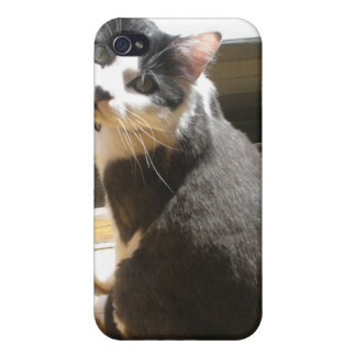 Chester the cat_sitting at the door cases for iPhone 4