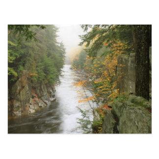Chesterfield Gorge Autumn Fog Postcard