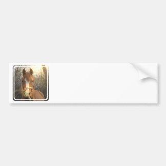 Chestnut Arab Horse Bumper Sticker Car Bumper Sticker