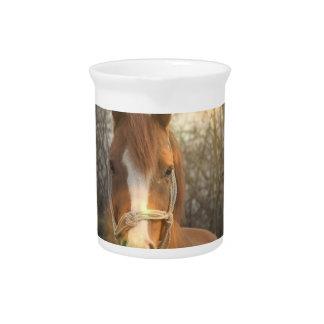 Chestnut Arab Horse Pitcher