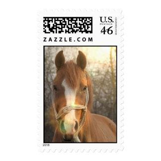 Chestnut Arab Horse Postage Stamp