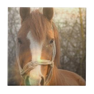 Chestnut Arab Horse Tile