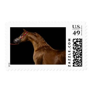 Chestnut Arabian Show Horse Postage Stamp