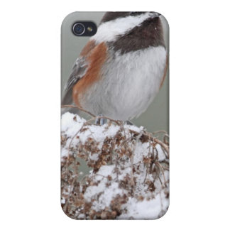 Chestnut Backed Chickadee in the Snow iPhone 4/4S Cover