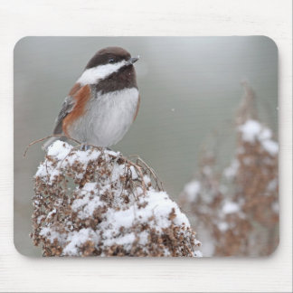 Chestnut Backed Chickadee in the Snow Mouse Pad