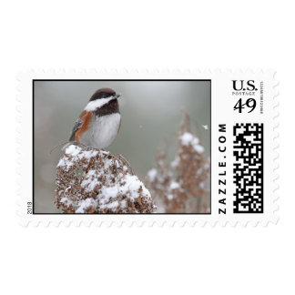 Chestnut Backed Chickadee in the Snow Postage Stamp