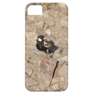 Chestnut backed sparrowlark (Eremopterix leucotis) iPhone SE/5/5s Case