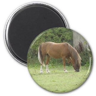 Chestnut Brown Horse Grazing Magnet