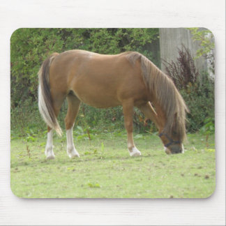 Chestnut Brown Horse Grazing Mousepad