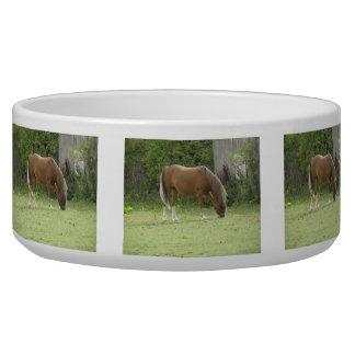 Chestnut Brown Horse Grazing Pet Bowl