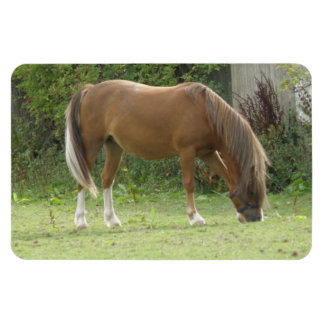 Chestnut Brown Horse Grazing Premium Magnet