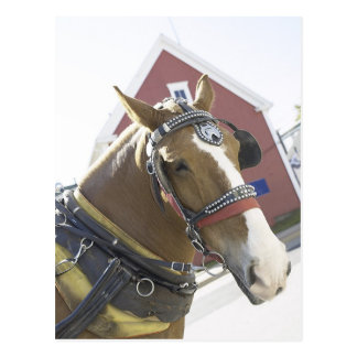 Chestnut Carriage Horse Postcard