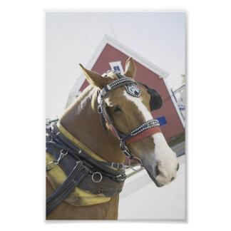 Chestnut Carriage Horse Poster
