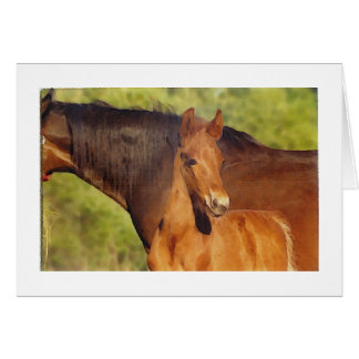 Chestnut foal note card