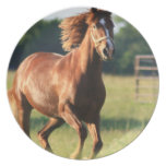 Chestnut Galloping Horse Plate