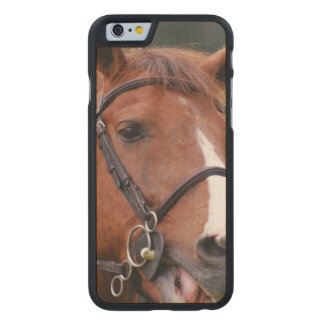 chestnut-horse-42 carved® maple iPhone 6 case