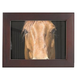 chestnut-horse-4 memory box