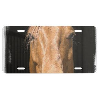 chestnut-horse-4 placa de matrícula