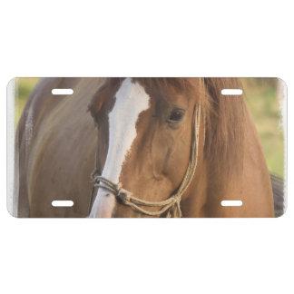 chestnut-horse-65.jpg placa de matrícula